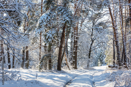 Foto Spatwand Winterlandschap Winter forest