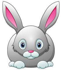 Cute rabbit cartoon isolated on white background