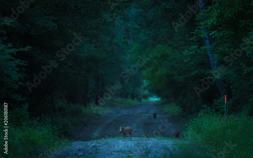Canvas Natuur Wild animals in the dark forest