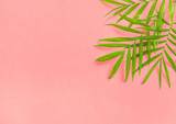 Palm leaves pink Floral flat lay Summer holidays - 206187136