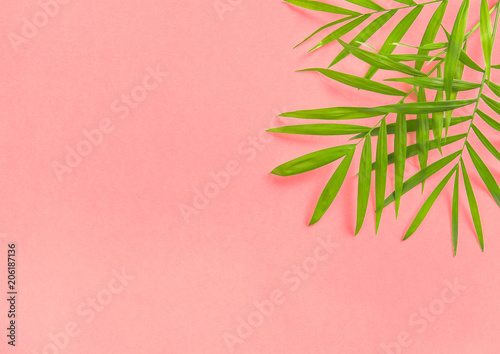 Palm leaves pink Floral flat lay Summer holidays