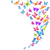 beautiful color butterflies,set, isolated  on a white - 206188745