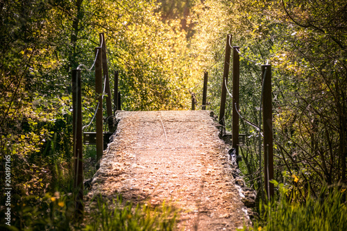 Aluminium Weg in bos puente