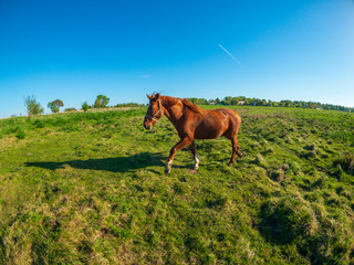 Horse is grazing at the green meadow near the pond