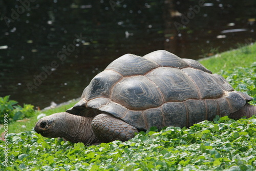 Aluminium Schildpad Schildkröte