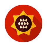 Sunflower icon. Vegetable vector