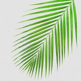 Palm leaf texture di cut.clipping path - 206228764