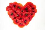 Czerwone serce z kwitnących kwiatów maków na białym tle © Wojciech