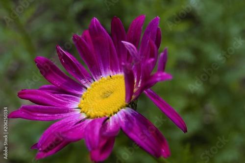 Foto Murales красивый цветок в саду