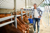 portrait of handsome farmer in a livestock small breeding husbandry farming production taking care of charolais cow and cattle - 206254716