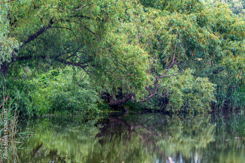 Fotobehang Olijf Landscape with green trees on river bank