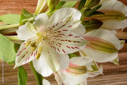 Foto Murales beautiful white flower