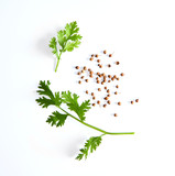 coriander leaf and seeds isolated on white background - 206280121