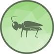 Grasshoppers, green, animal