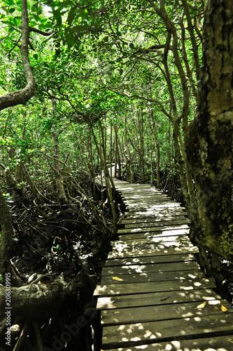 Fotobehang Weg in bos Voyage