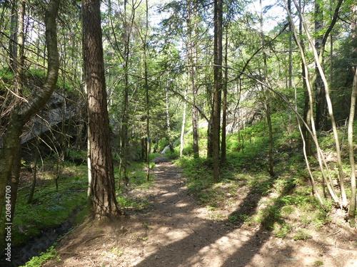Fotobehang Weg in bos Norvège