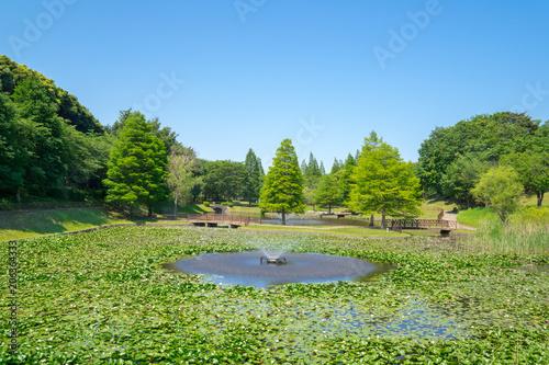 Foto Murales 新緑の公園