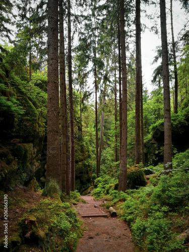 Aluminium Weg in bos Suisse saxonne
