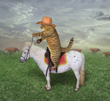 The cat cowboy on a horse grazes his cows. - 206371778