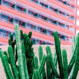 Cactus in urban location. fashion pink minimal - 206389167