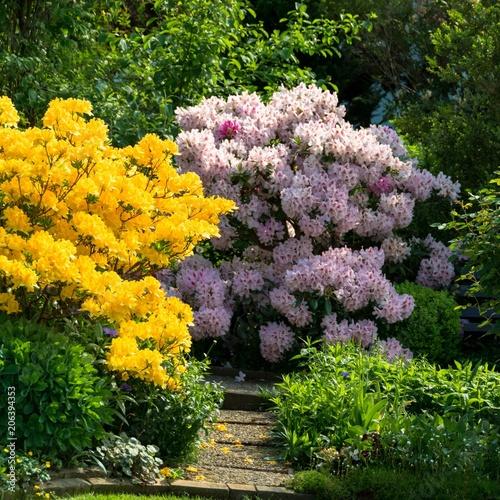 Aluminium Azalea Rhododendron und Azaleenstrauch