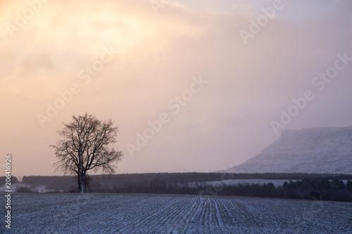 Fotobehang Beige Snowy landscape in Soria Spain