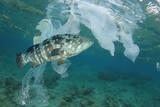 Plastic pollution in ocean. Plastics contaminate seafood and fish