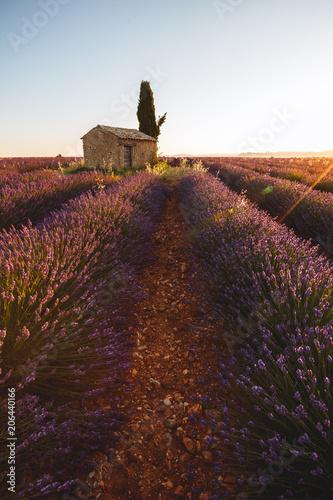 Aluminium Lavendel Champs de Lavande, Valensole, Provence, France