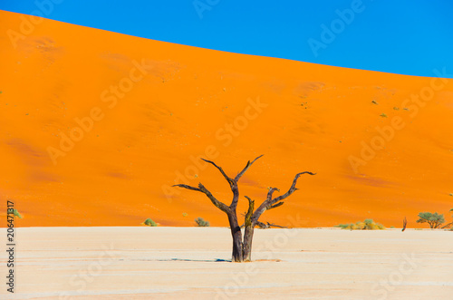 Fotobehang Oranje eclat Colorful dunes at Deadvlei in the Namib Desert in Namibia, Southern Africa
