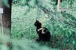 Black cat in tropical forest, leaves close up photo. Animal portrait.