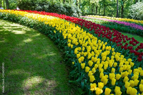 Fotobehang Tulpen Tulpen im Garten