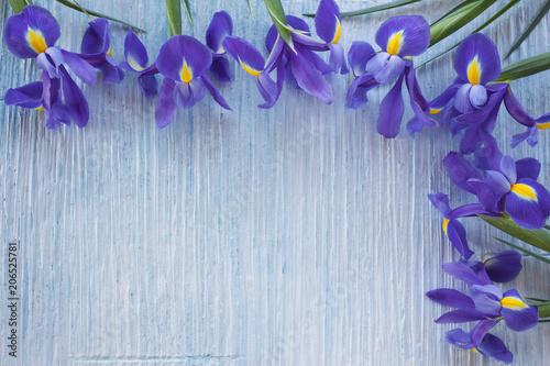 Aluminium Iris Background with blue iris flowers for congratulations, invitations