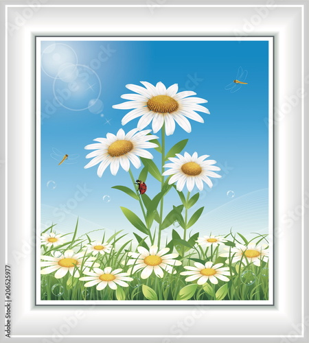 Fotobehang Pool Flower meadow with chamomiles