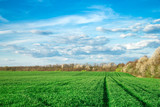 Green field and blue sky - 206529911