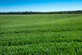 field of green grass and sky - 206530303