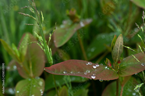 Canvas Natuur Raindrops
