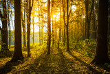 Golden autumnal forest with sunbeams - 206531572