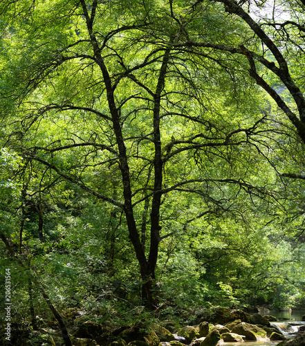 Foto Murales un immense arbre et ses ramifications