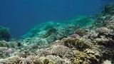Wonderful underwater world - 206536553