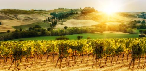 Vineyard landscape in Tuscany, Italy.