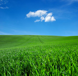 field of green grass and sky - 206550384