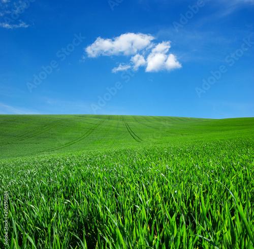 Aluminium Groene field of green grass and sky