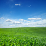 green field and blue sky with clouds - 206552305