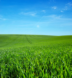 green field and blue sky with clouds - 206552375