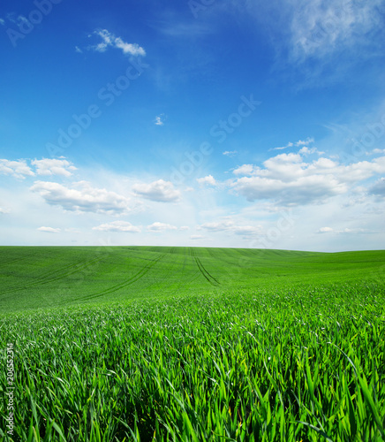 field of green grass and sky - 206552314