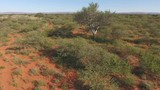 Low flying aerial view of the African savannah, Northern Cape, South Africa - 206566708