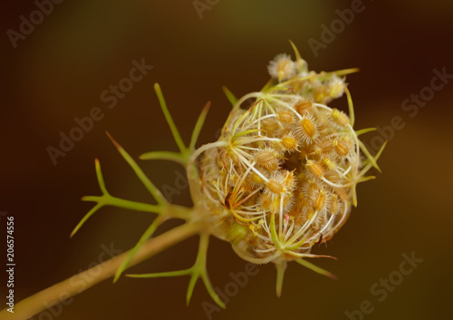 Fotobehang Abstractie Plant bud seeds cumin spices.