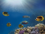 Marine Life in the Red Sea - 206575305