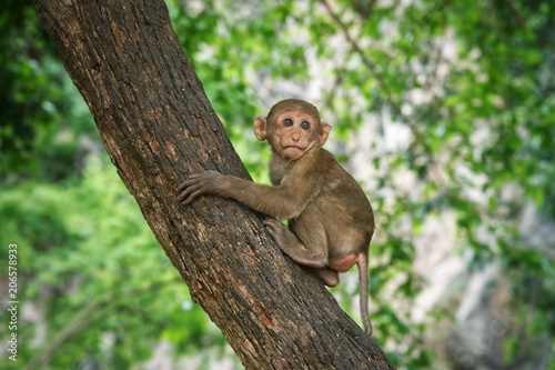 Fotobehang Aap Young macaque sitting on a tree : Closeup