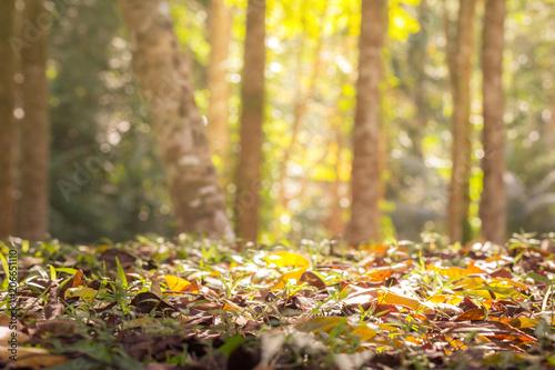 Fotobehang Herfst falling leaves autumn season